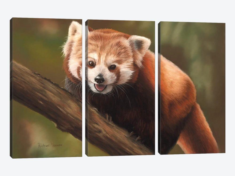 Red Panda by Richard Macwee 3-piece Canvas Art