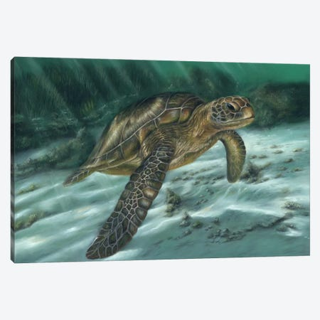 Sea Turtle Canvas Print #RMC46} by Richard Macwee Canvas Artwork