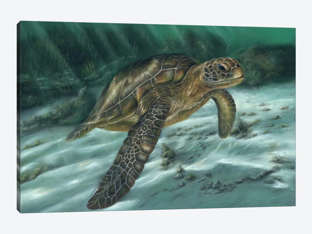 Sea Turtle by Richard Macwee 1-piece Canvas Artwork