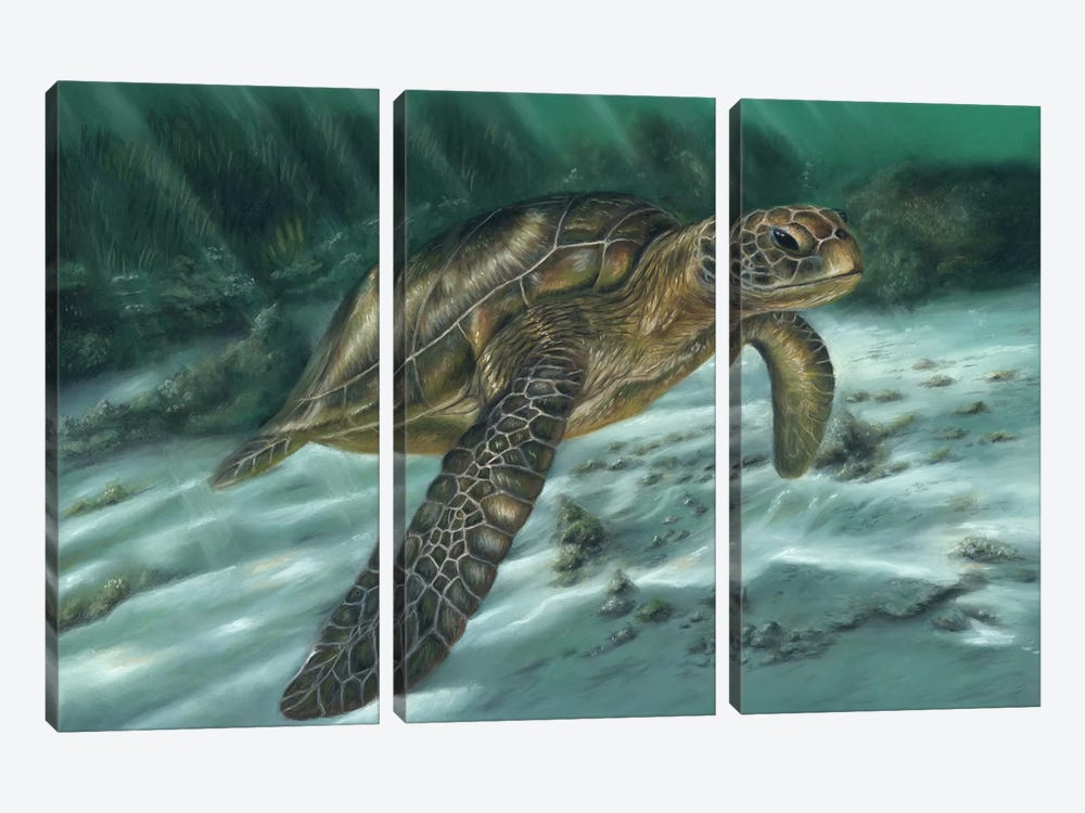Sea Turtle by Richard Macwee 3-piece Canvas Art