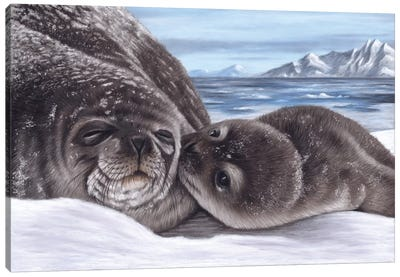 Seal And Pup Canvas Art Print