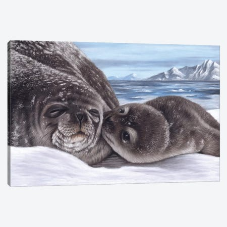 Seal And Pup Canvas Print #RMC47} by Richard Macwee Canvas Wall Art