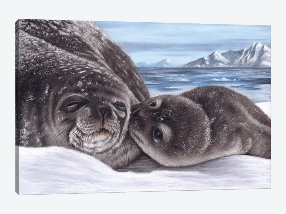 Seal And Pup by Richard Macwee 1-piece Art Print
