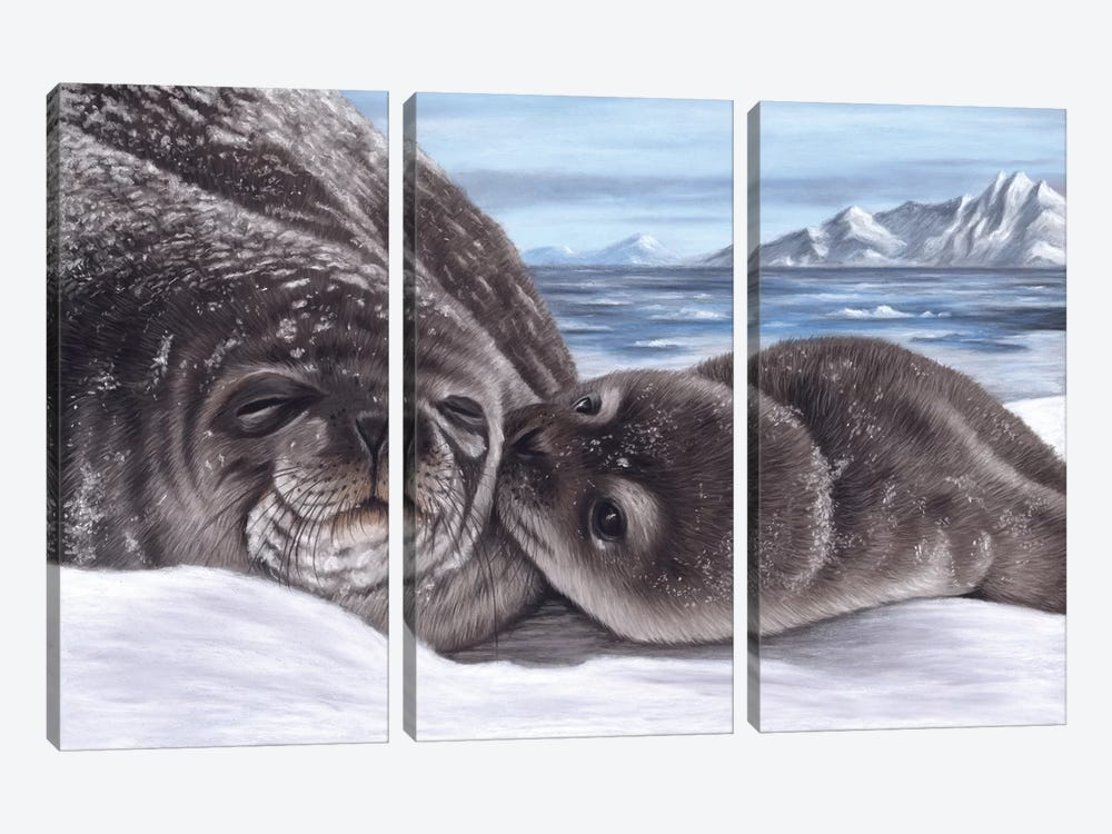 Seal And Pup by Richard Macwee 3-piece Art Print