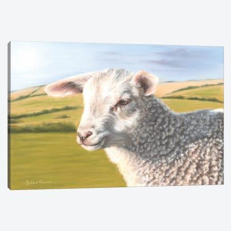 Sheep Canvas Print #RMC48} by Richard Macwee Art Print