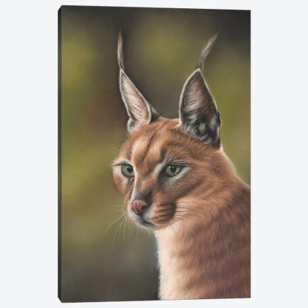 Caracal Canvas Print #RMC4} by Richard Macwee Canvas Artwork