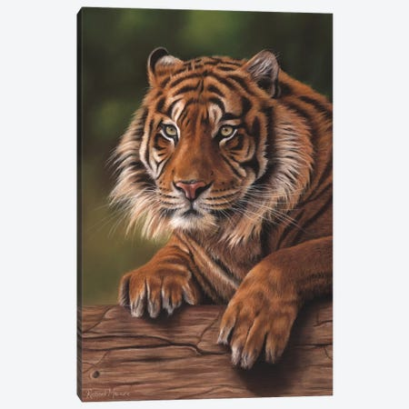 Siberian Tiger Canvas Print #RMC50} by Richard Macwee Canvas Artwork