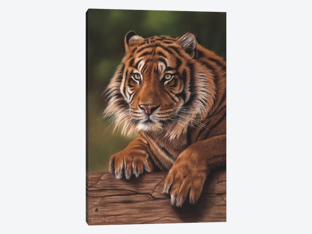 Siberian Tiger by Richard Macwee 1-piece Canvas Print