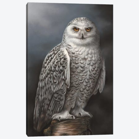 Snowy Owl Canvas Print #RMC52} by Richard Macwee Canvas Wall Art