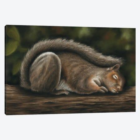 Squirrel Canvas Print #RMC53} by Richard Macwee Canvas Art