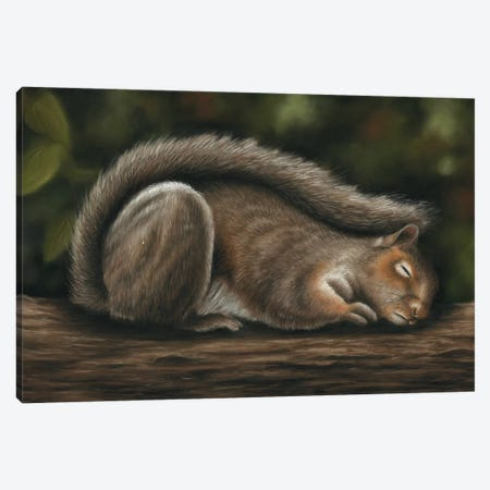 Squirrel Canvas Print #RMC53} by Richard Macwee Canvas Art