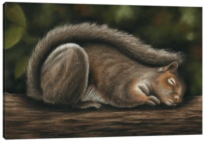 Squirrel Canvas Art Print