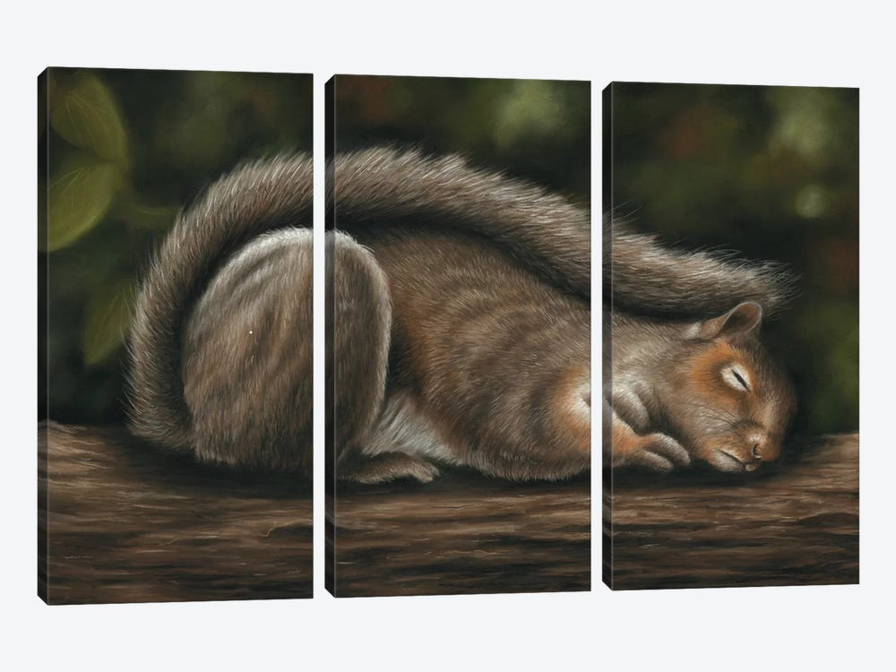 Squirrel by Richard Macwee 3-piece Canvas Art
