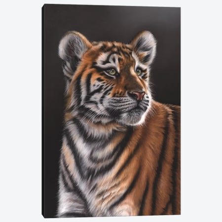 Tiger Cub 3-Piece Canvas #RMC54} by Richard Macwee Canvas Print