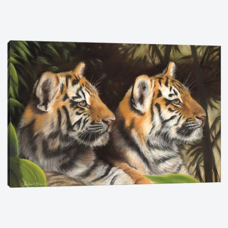 Tiger Cubs 3-Piece Canvas #RMC55} by Richard Macwee Art Print