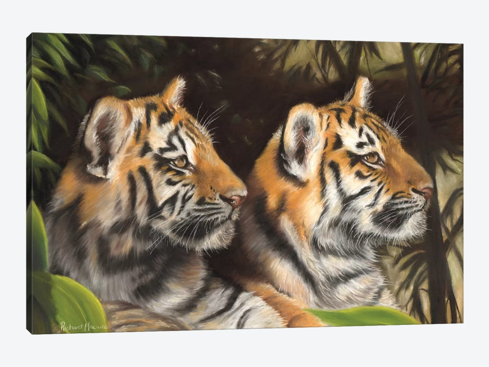 Tiger Cubs by Richard Macwee 1-piece Canvas Wall Art