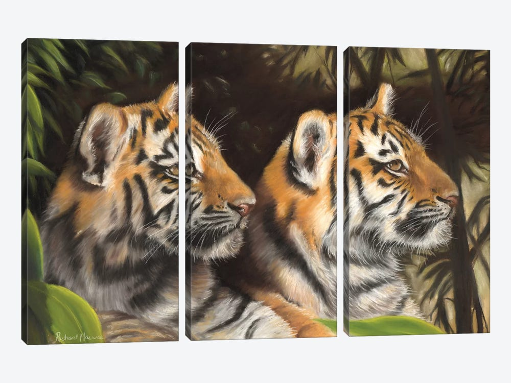 Tiger Cubs by Richard Macwee 3-piece Canvas Artwork