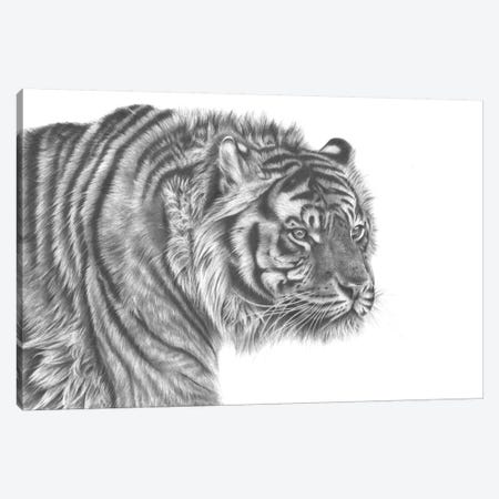 Tiger Drawing 3-Piece Canvas #RMC56} by Richard Macwee Canvas Print