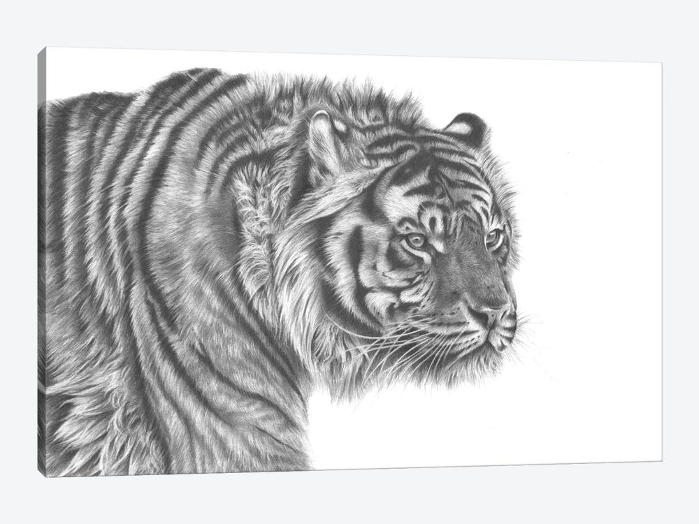 Tiger Drawing by Richard Macwee 1-piece Canvas Print