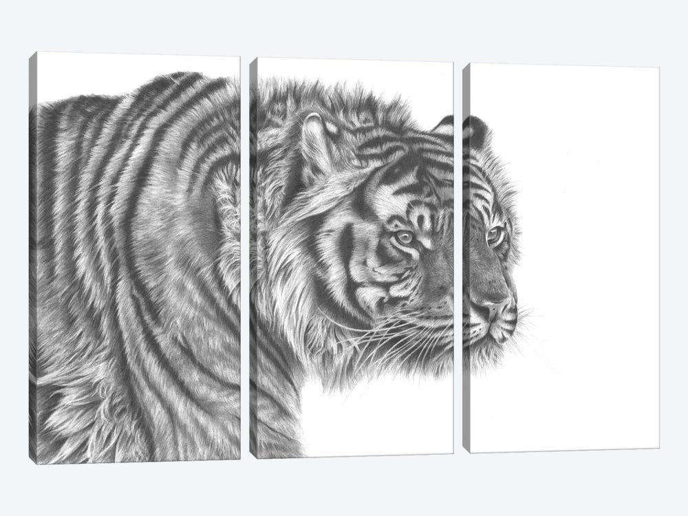 Tiger Drawing by Richard Macwee 3-piece Art Print