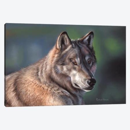 Tundra Wolf 3-Piece Canvas #RMC58} by Richard Macwee Canvas Wall Art