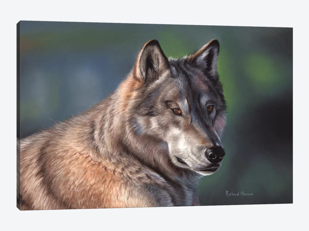 Tundra Wolf by Richard Macwee 1-piece Canvas Print