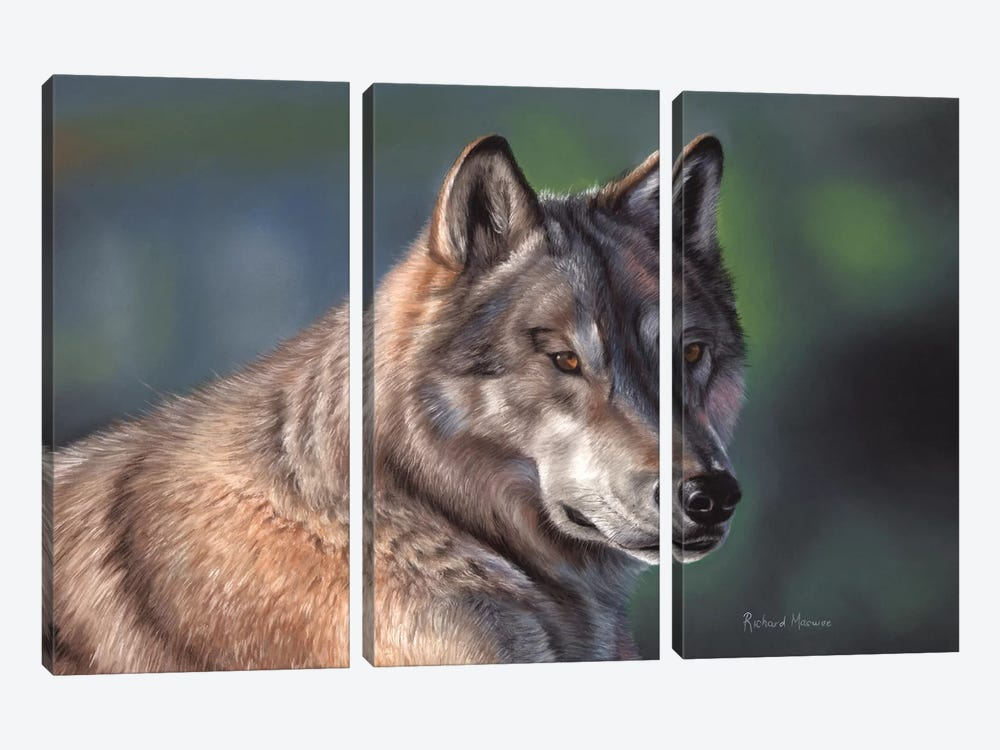 Tundra Wolf by Richard Macwee 3-piece Art Print