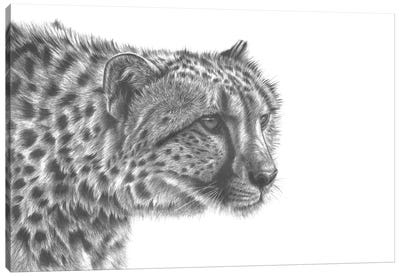 Cheetah Drawing Canvas Art Print