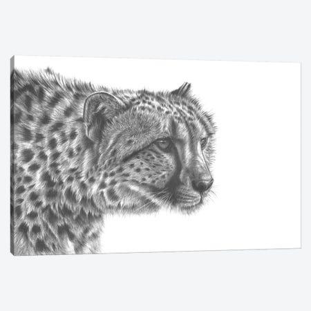 Cheetah Drawing Canvas Print #RMC5} by Richard Macwee Canvas Wall Art