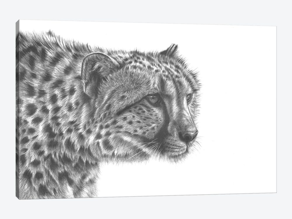Cheetah Drawing by Richard Macwee 1-piece Canvas Art