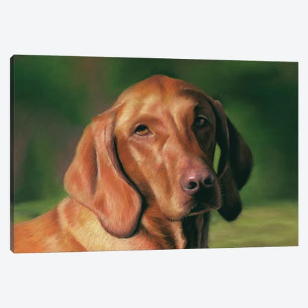 Vizsla Canvas Print #RMC60} by Richard Macwee Canvas Art Print