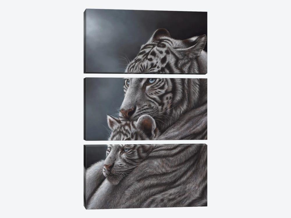 White Tiger by Richard Macwee 3-piece Art Print
