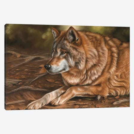 Wolf Canvas Print #RMC62} by Richard Macwee Canvas Print