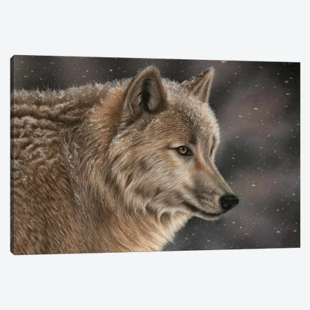 Wolf In Snow Canvas Print #RMC63} by Richard Macwee Canvas Print