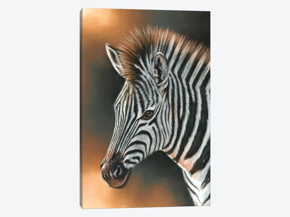 Zebra by Richard Macwee 1-piece Canvas Print
