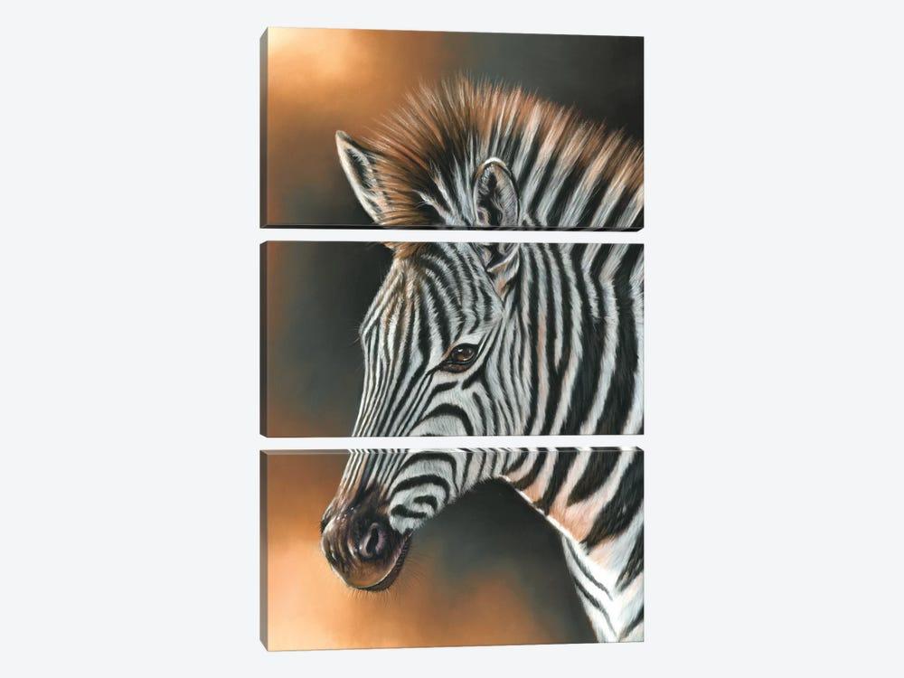 Zebra by Richard Macwee 3-piece Art Print