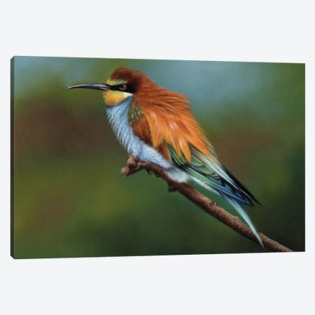 Bee Eater Canvas Print #RMC67} by Richard Macwee Canvas Art