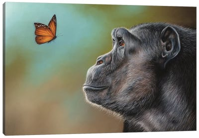 Chimpanzee And Butterfly Canvas Art Print