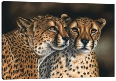 Cheetahs Canvas Art Print