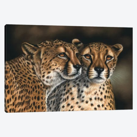 Cheetahs Canvas Print #RMC6} by Richard Macwee Canvas Wall Art