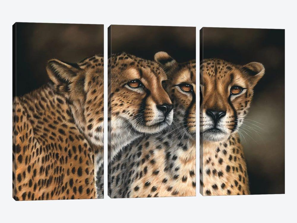Cheetahs by Richard Macwee 3-piece Canvas Print