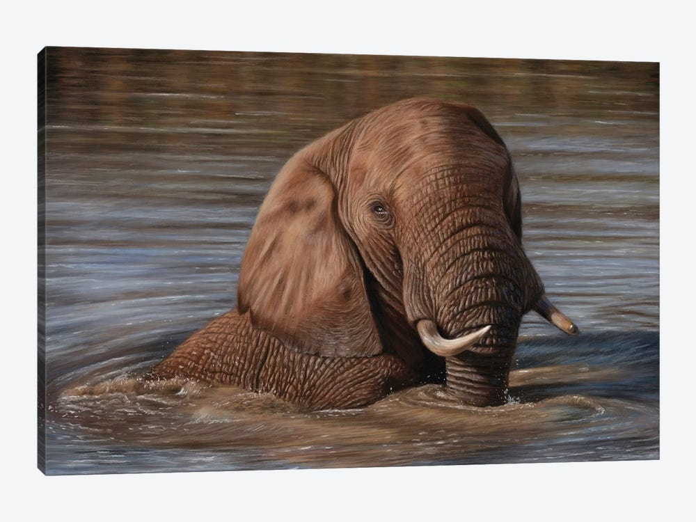 Elephant In Water by Richard Macwee 1-piece Canvas Print