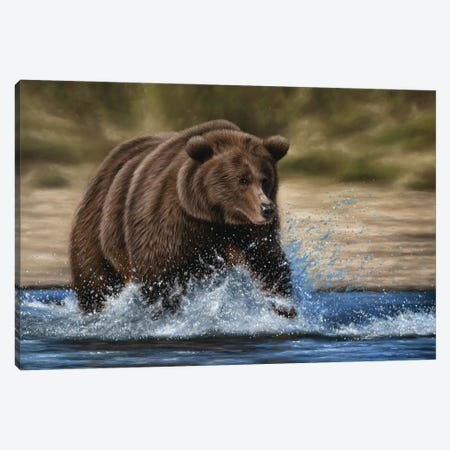 Grizzly Bear In Water Canvas Print #RMC72} by Richard Macwee Canvas Art