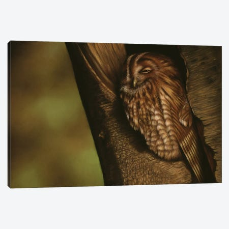 Tawny Owl Canvas Print #RMC78} by Richard Macwee Canvas Artwork