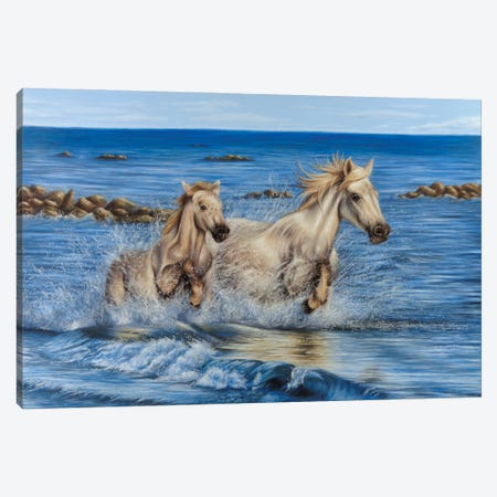 Camargue Horses Canvas Print #RMC79} by Richard Macwee Canvas Art