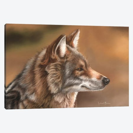 Coyote Canvas Print #RMC8} by Richard Macwee Art Print