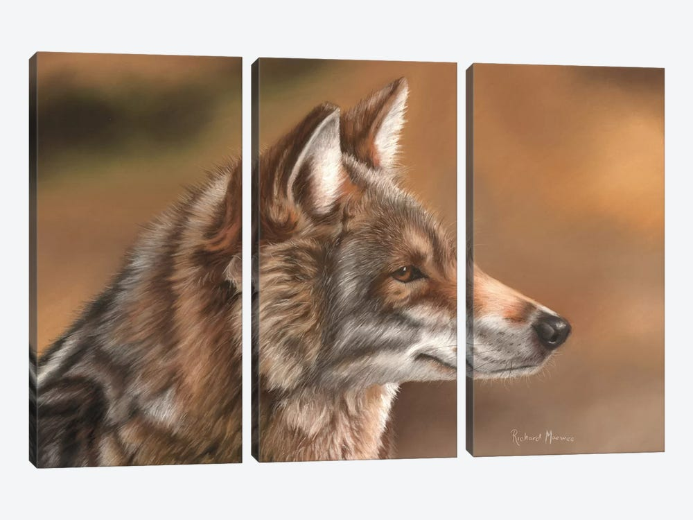 Coyote by Richard Macwee 3-piece Canvas Art Print