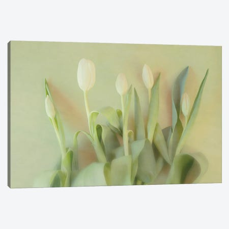 Floral Sonnet Canvas Print #RMU100} by Roberta Murray Canvas Artwork