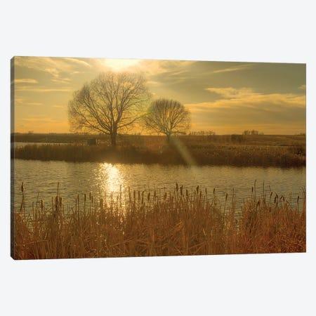 The Elm Tree Canvas Print #RMU118} by Roberta Murray Canvas Print