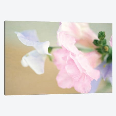 Pastel Blossoms Canvas Print #RMU130} by Roberta Murray Canvas Print